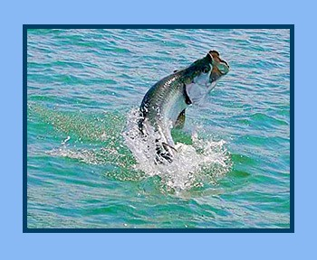 TARPON FISHING in Little Cayman